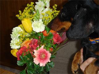 dog20060416