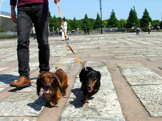 dog200605031