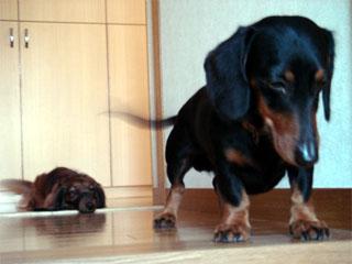 dog200605211