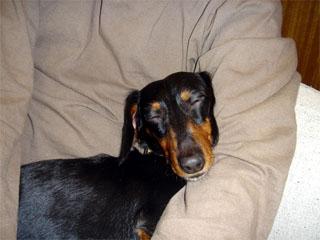 dog200605212
