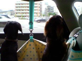 dog200605282