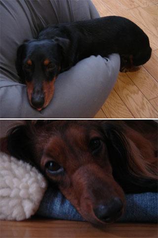 dog200606181
