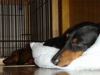 dog200606192