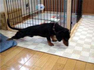 dog200606231