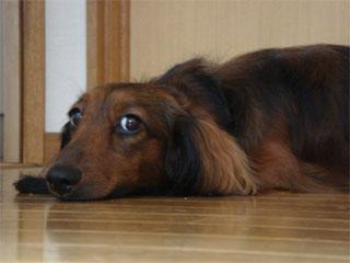 dog200606241