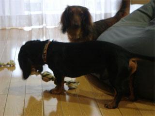 dog200606242