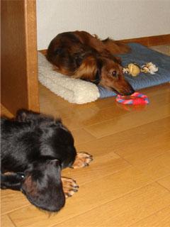 dog200607041
