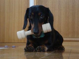 dog200607194