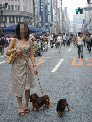 dog200607232