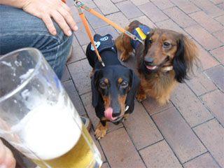 dog200608151