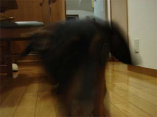 dog1007