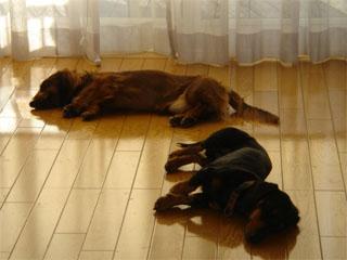 dog20060114