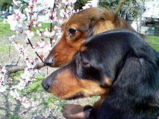 dog20060321