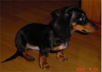 junior_200209.jpg
